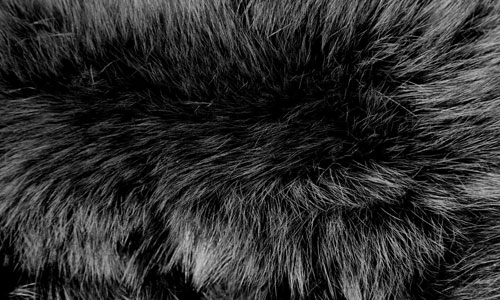 Extremely Lovely Fur Texture