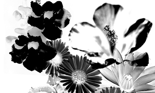 Simply Nice Floral Brushes