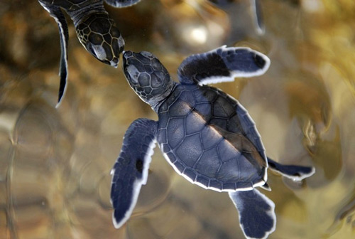 Sweet Baby Turtle Photo