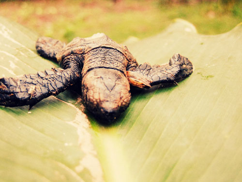 Really Fantastic Baby Turtle Photo