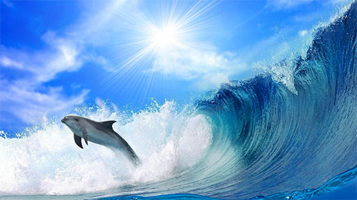 Inspiring Dolphin WP