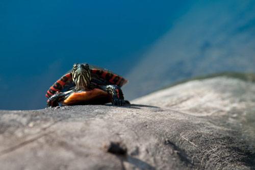 Engaging Baby Turtle Photo