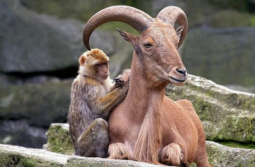 Very Unlikely Animal Friendship Photo