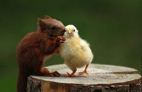Amazingly Cute Animal Friendship Photo