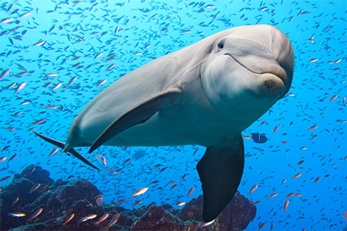 Scenic Dolphin WP