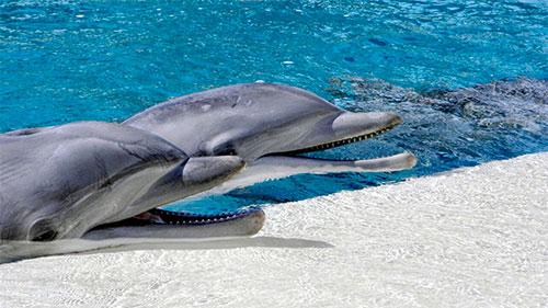 Fantastic Dolphin