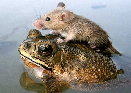 Simply Unbelievable Animal Frienship Photo