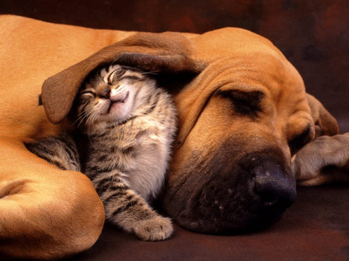 Forever Sweet Cat and Dog Friendship Photo