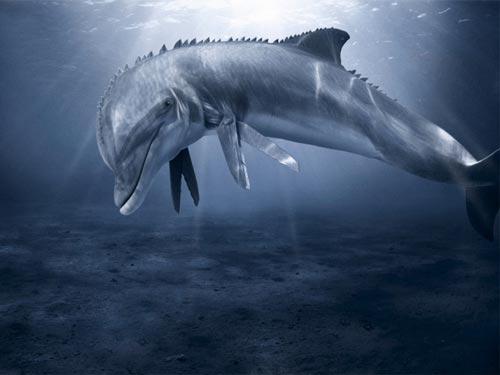 Gregarious Dolphin WP