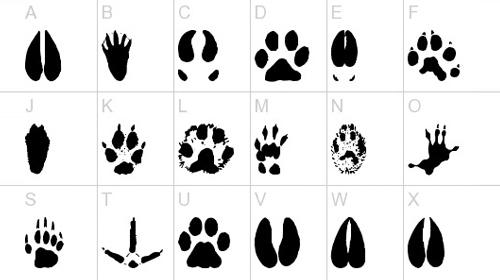 AnimalTracks font