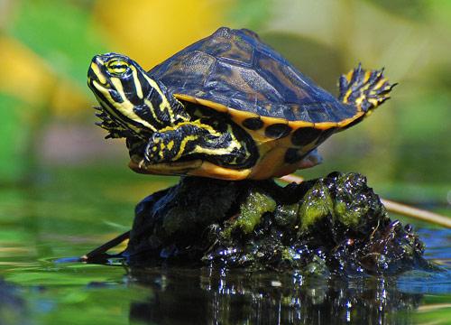 Exuberant Baby Turtle Photo