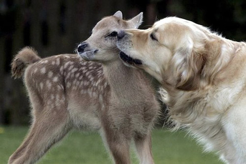 Very Expressive Photo of A Dog and A Deer