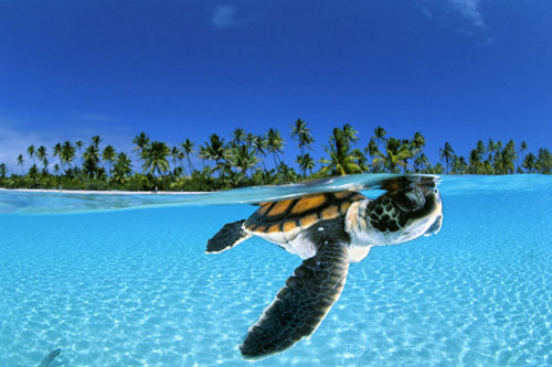 Awesome Baby Turtle Photo