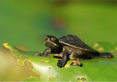 Charming Baby Turtle Photo