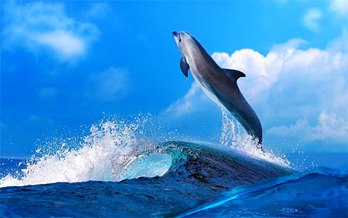 Powerful Dolphin WP