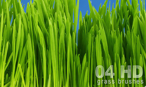 Perfect Set of Grass Photoshop Brushes
