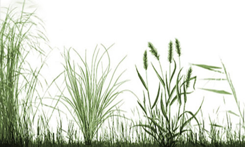 Simply Inspiring Set of Grass Photoshop Brushes