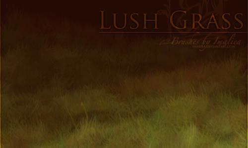 Organized Set of Grass Photoshop Brushes
