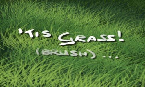 Good Choice Set of Grass Photoshop Brushes