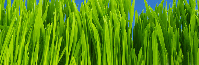 A Collection of Free Photoshop Grass Brush Sets