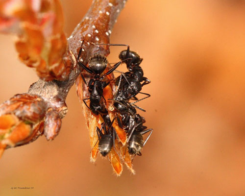 Amazing ants photography.