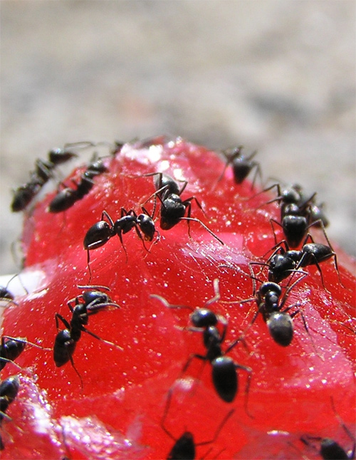 Busy ants photography.