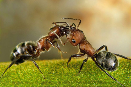 So inlove ants photography.