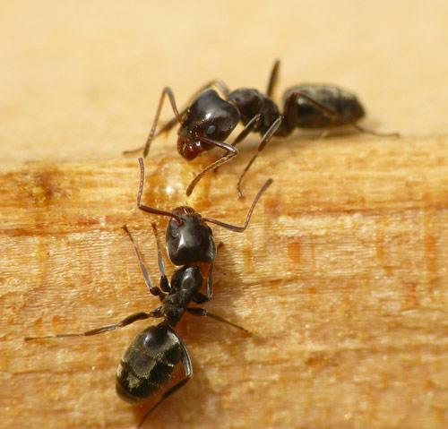 Sweet ants photography.
