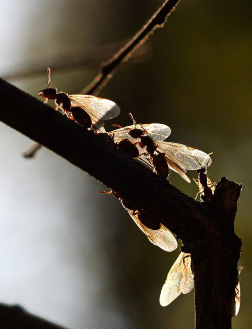 So cute ants photography.