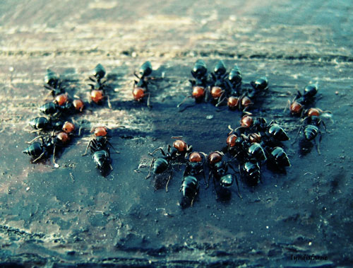 In the meeting ants photography.