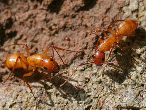 Proud ants photography.