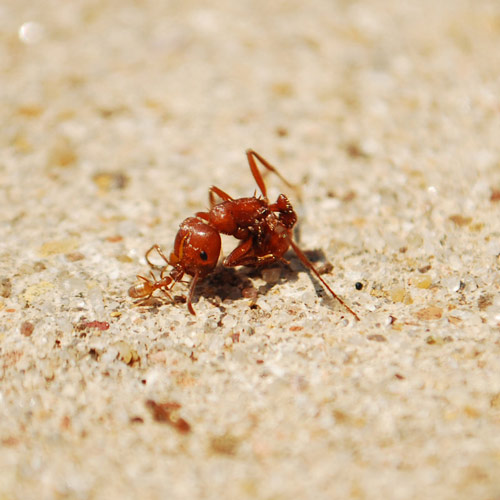 Funny big and small ants photography.