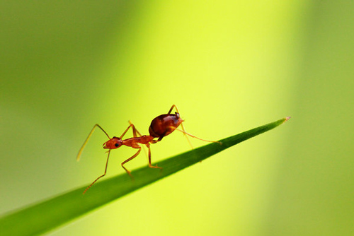 So lively ants photography.