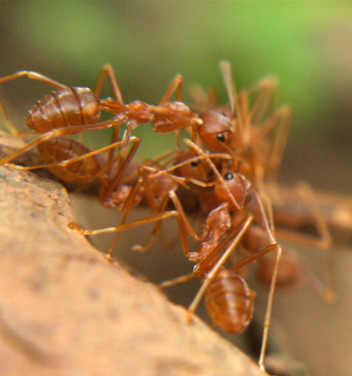 Awesome ants photographyo.