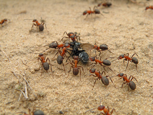 Funny eating ants photography.