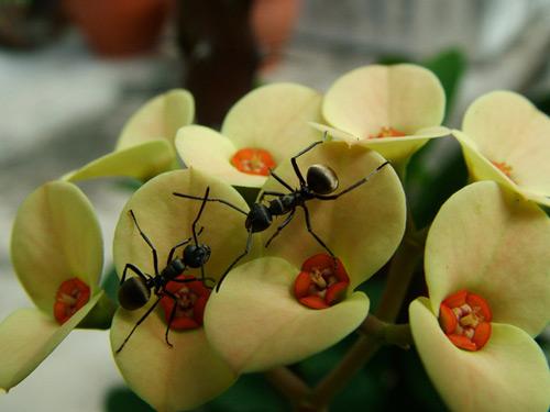 So amusing scene ants photography.