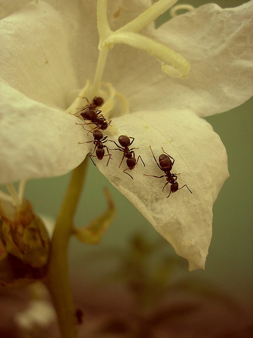 Very attractive ants photography.