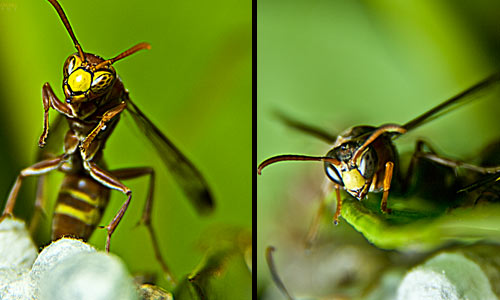 Various Angles for Macro Photography