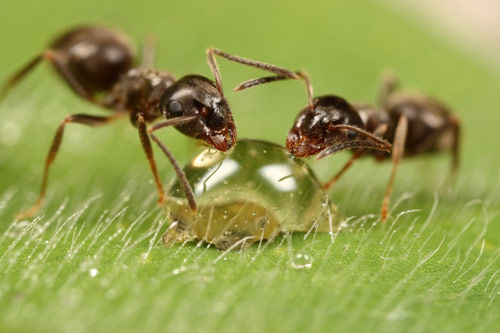 A Loving scene ants photography .