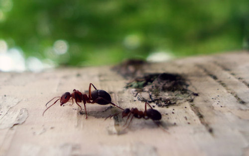 Very friendly ants photography.