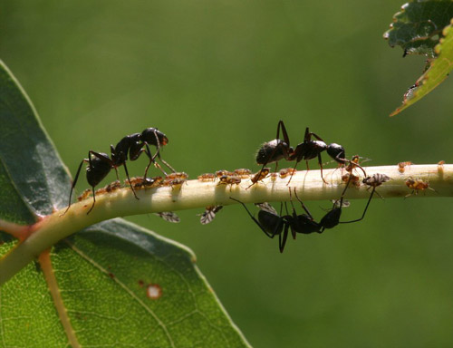 Playful ants photography.
