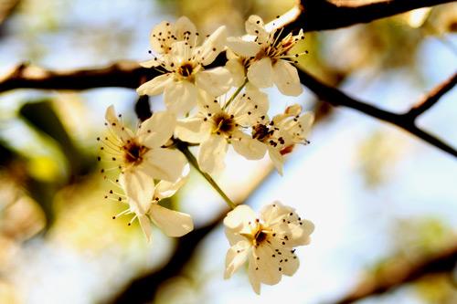 Glamorous Flower Photo