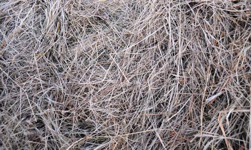 Useful Hay Texture