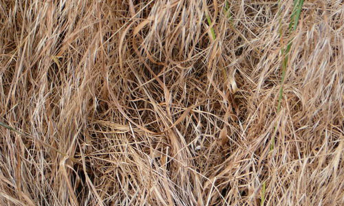 Really Soft Hay Texture