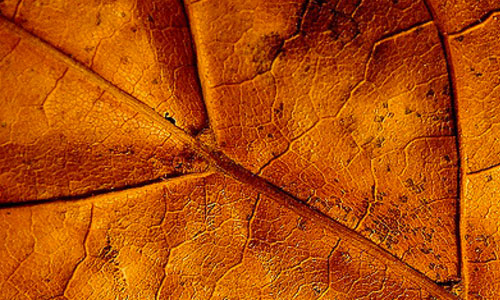 Light Dried Leaf Texture