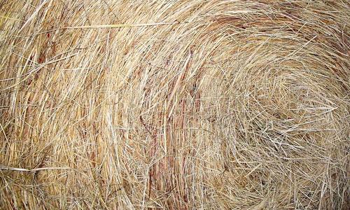 Fine Hay Texture