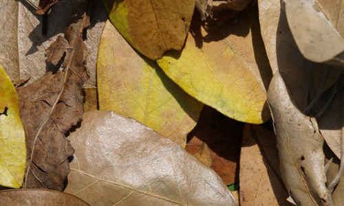 Amiable Dried Leaf Texture