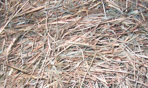 So Natural Hay Texture