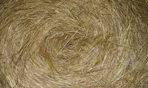 Eye-Catching Hay Texture