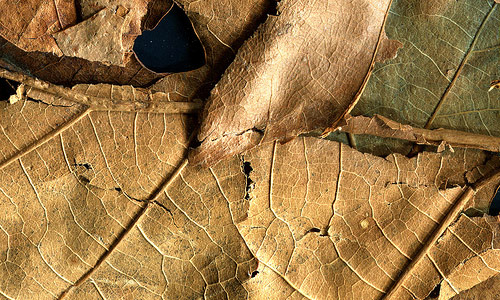Well-Spirited Dried Leaf Texture